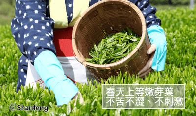 春天抹茶季就是要吃抹茶麵!身為抹茶控的你還沒吃過抹茶麵嗎? - 2