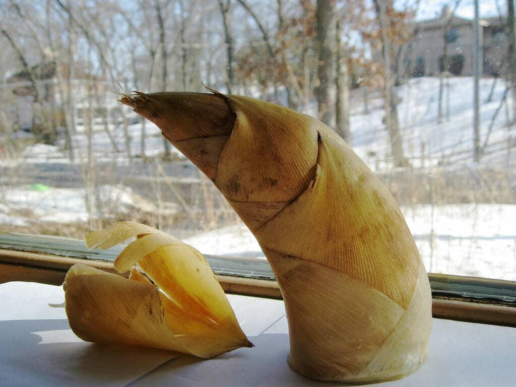 筍子冷凍保鮮 鮮甜筍子